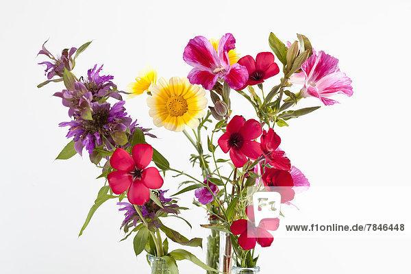 Diverse Wiesen- und Wildblumen vor weißem Hintergrund  Nahaufnahme