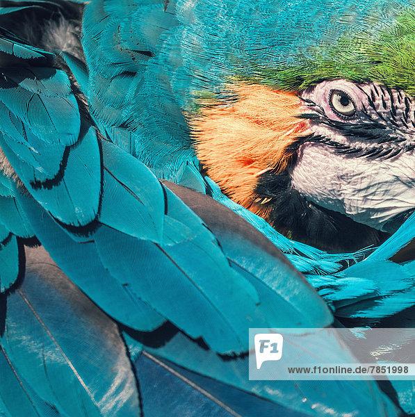 Spanien  Malaga  Papagei  Nahaufnahme
