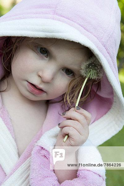 Kleines Mädchen reibt Löwenzahn-Samenkopf auf Gesicht