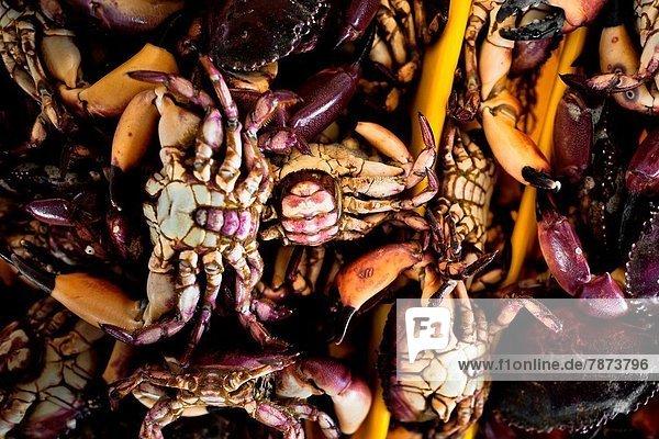 Lima  Hauptstadt  Fisch  Pisces  Speisefisch und Meeresfrucht  Krabbe  Krebs  Krebse  verkaufen  Markt  Peru