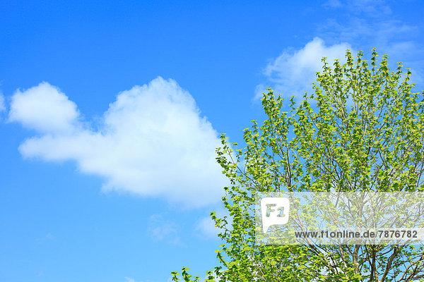 Wolke Himmel