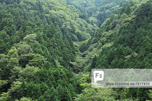 Shizuoka Präfektur