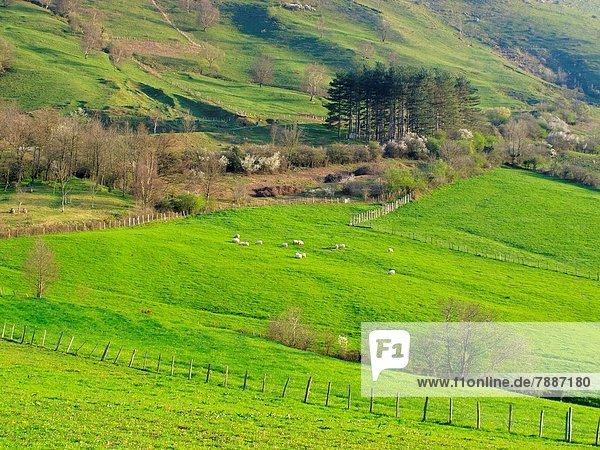 Ländliches Motiv  ländliche Motive  Europa  Landschaft  Guipuzcoa  Spanien