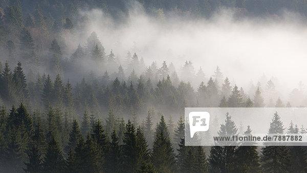 Schluchtensteig  Schwarzwald  Baden-Württemberg  Deutschland  Europa