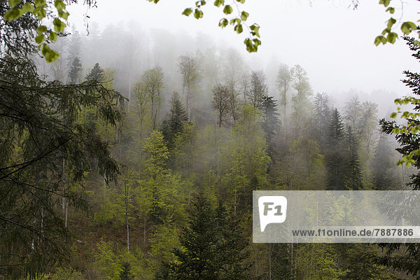 Schluchtensteig und Wehraschlucht  Schwarzwald  Baden-Württemberg  Deutschland  Europa