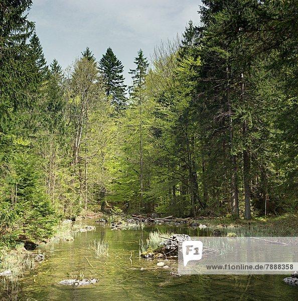 Fluss in einem Wald in Oberösterreich  Österreich Fluss in einem Wald in Oberösterreich, Österreich