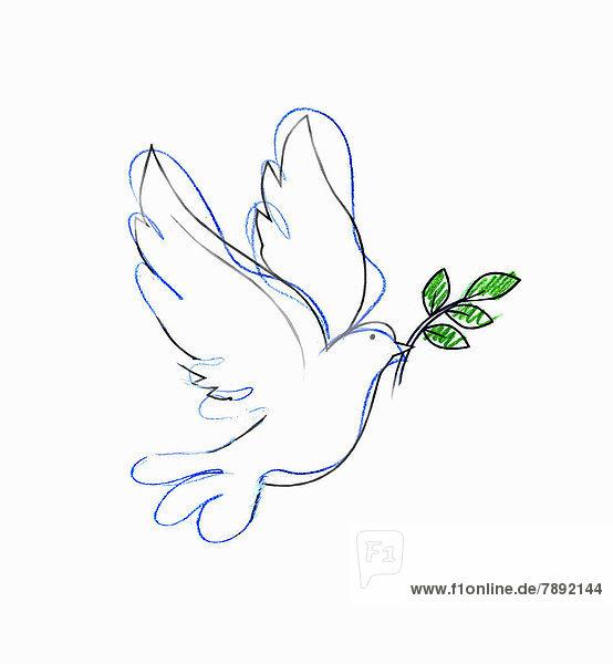 Zeichnung einer Taube mit Ölzweig Zeichnung einer Taube mit Ölzweig