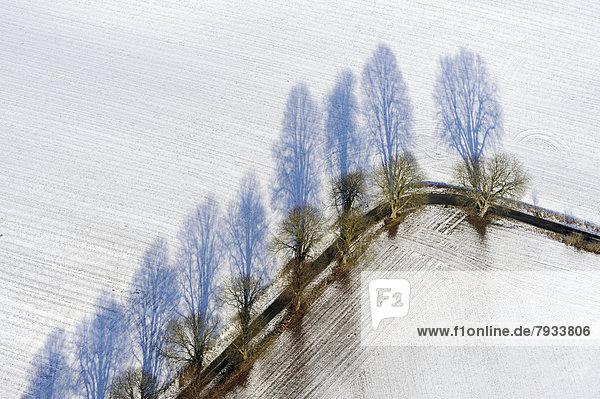 Luftbild  Allee im Winter