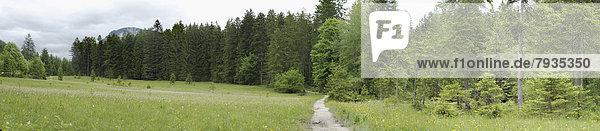 Fußweg in einer Naturlandschaft  Steiermark  Österreich Fußweg in einer Naturlandschaft, Steiermark, Österreich