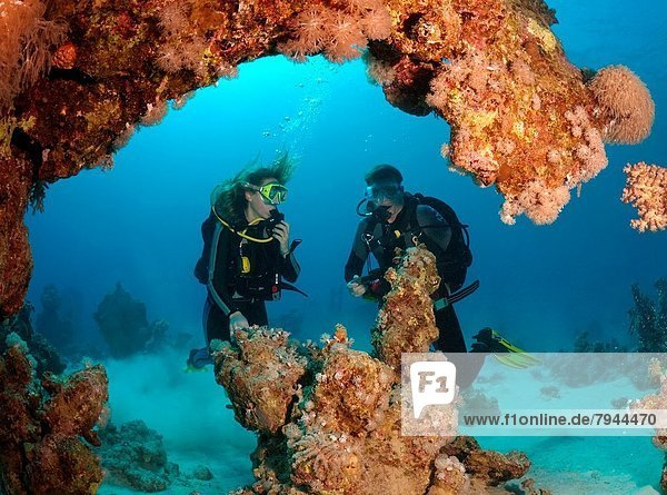 diver and coral reef  Red Sea  Egypt  Africa.