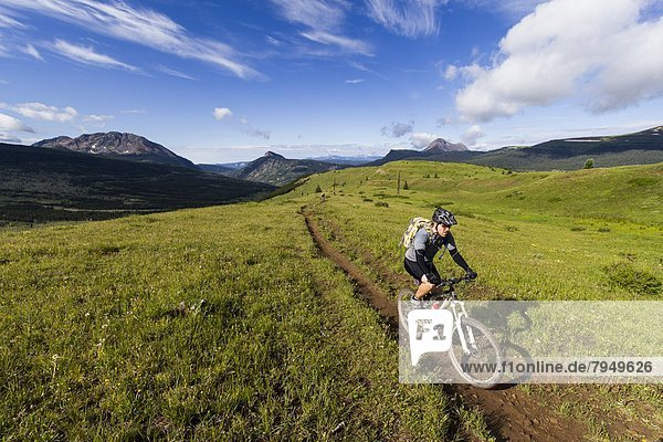 A mountain biker riding on a trail through a mountain meadow.
