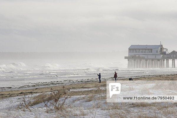 nahe  Winter  nehmen  gehen  Strand  Sturm  Hund  Kai  groß  großes  großer  große  großen  Fotografie  Obstgarten  alt  Brandung