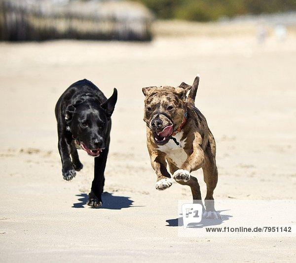 Strand  Hund  Spiel  nachlaufen  2