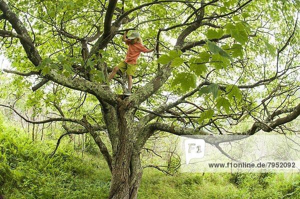 Berg  Baum  schwarz  jung  Mädchen  North Carolina