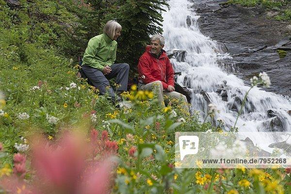 Entspannung  Feld  Wildblume