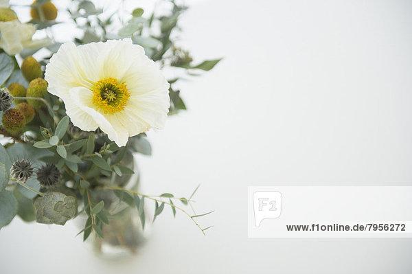 Blumenstrauß  Strauß  weiß  Hintergrund  schießen  Studioaufnahme