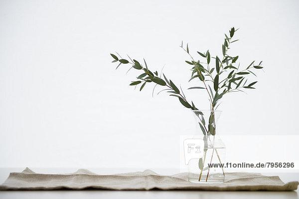 Glas  Blumenvase  schießen  Studioaufnahme  Zweig  Eukalyptus