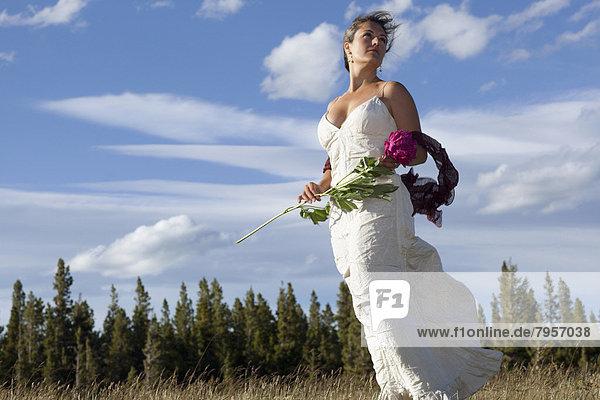 stehend  Braut  Wiese