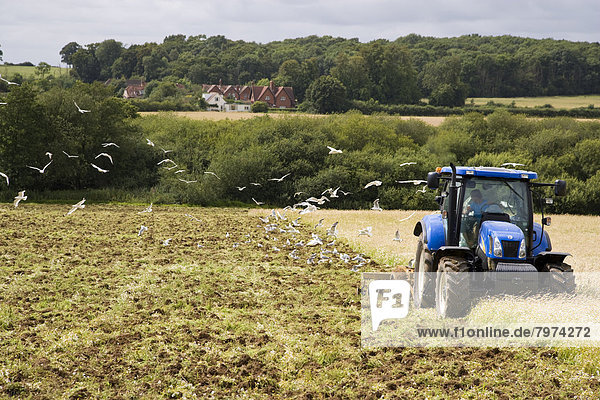 folgen Traktor Feld Möwe Pflug West Sussex