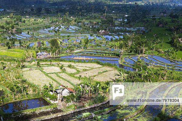 Indonesien  Blick auf Reisfelder am Berg Abang