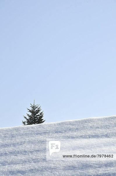 Tannenbaum hinter verschneitem Dach