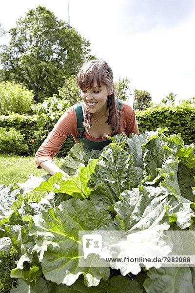 Junge Frau schneidet Pieplant  lächelnd