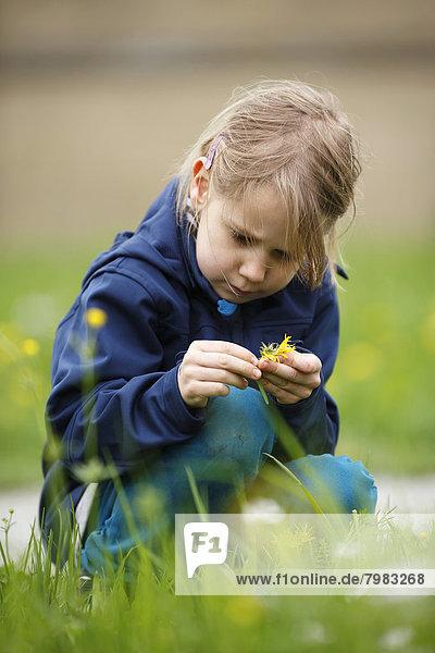 Germany  Baden Wuerttemberg  Girl examining flower  close up