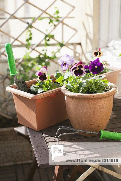 Aufsicht,Außenaufnahme,Blume,Blumentopf,Botanik