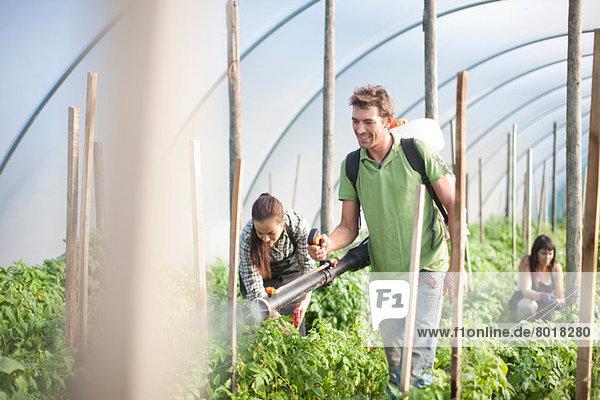 Leute  die auf der Gemüsefarm arbeiten.