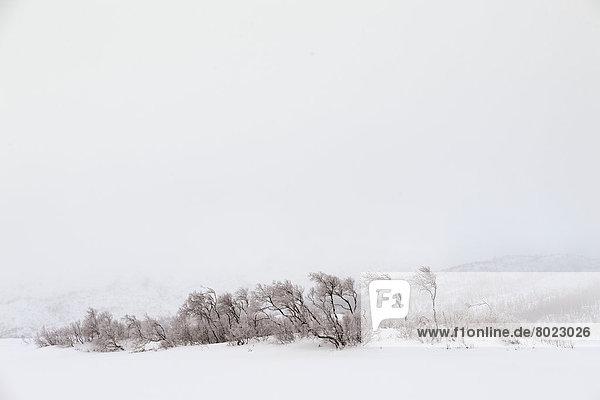 Baumgruppe in Schnee und Nebel