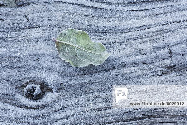 bedecken Strand Pflanzenblatt Pflanzenblätter Blatt Sonnenaufgang vorwärts Mackenzie River Frost bedecken,Strand,Pflanzenblatt,Pflanzenblätter,Blatt,Sonnenaufgang,vorwärts,Mackenzie River,Frost
