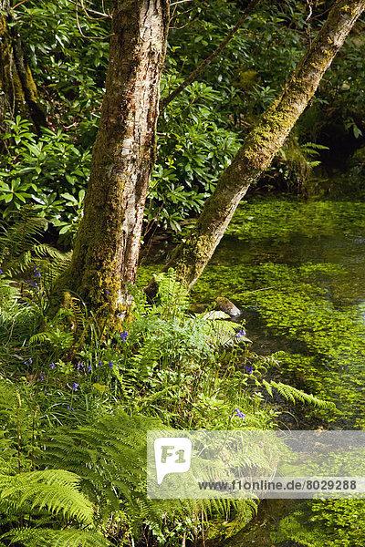 klein  rennen  Überfluss  Wald