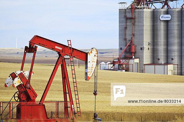 Getreide  Hintergrund  Saskatchewan  Kanada