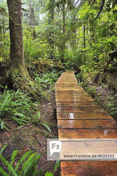 folgen  Holzweg  Pazifischer Ozean  Pazifik  Stiller Ozean  Großer Ozean  Regenwald