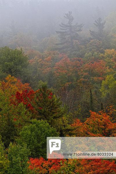 Farbaufnahme  Farbe  Dunst  Herbst  Landhaus