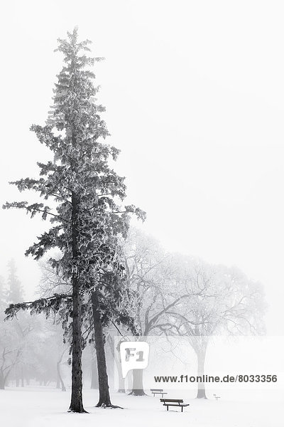 Winter Eis Nebel Assiniboine Kanada Manitoba Winnipeg