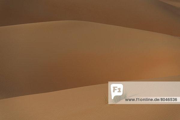 Abu Dhabi  Hauptstadt  Detail  Details  Ausschnitt  Ausschnitte  Vereinigte Arabische Emirate  VAE  Sand  Gras  Düne  Abenddämmerung