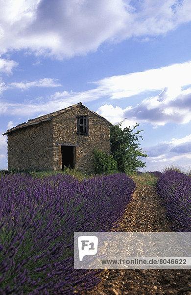 France  Provence.