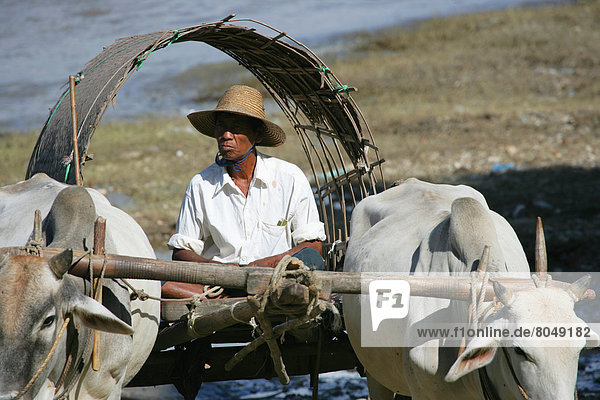 Men on cart with Irrawaddy River in background  Mingun  Burma/Muanmar