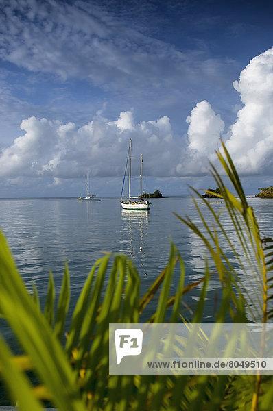Sailboats at True Blue Bay  Grenada  Caribbean