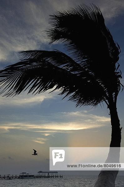 Sunrise over pier and boat dock  Islamorada  Florida Keys  Florida  USA