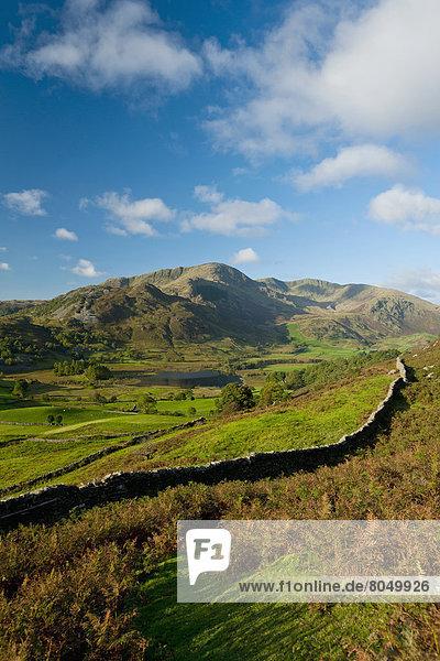 Hügel  Schaf  Ovis aries  hoch  oben  Herde  Herdentier  Vogelschwarm  Vogelschar  Cumbria  England