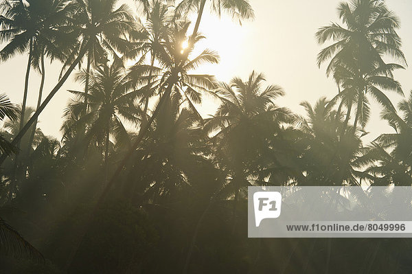 Baum  ankommen  Morgendämmerung  Sri Lanka  Sonne