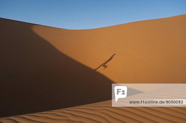 hoch  oben  nahe  Mann  rennen  Schatten  Sand  Düne  Merzouga  Marokko