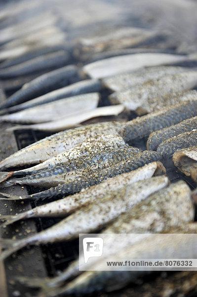 Trouville (14): Grilled mackerels
