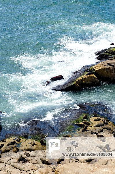 Felsbrocken hoch oben Leuchtturm Ansicht Seelöwe Südamerika Uruguay