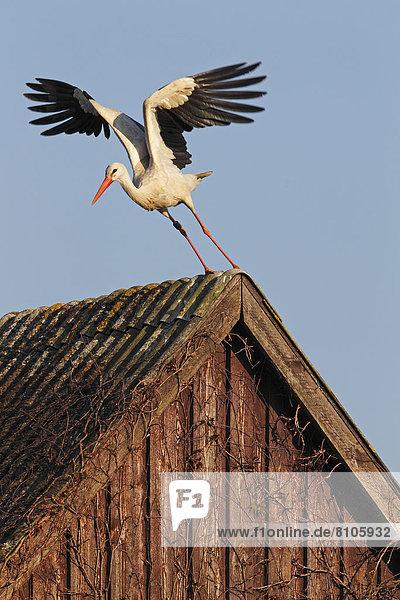 Dach nehmen weiß Storch
