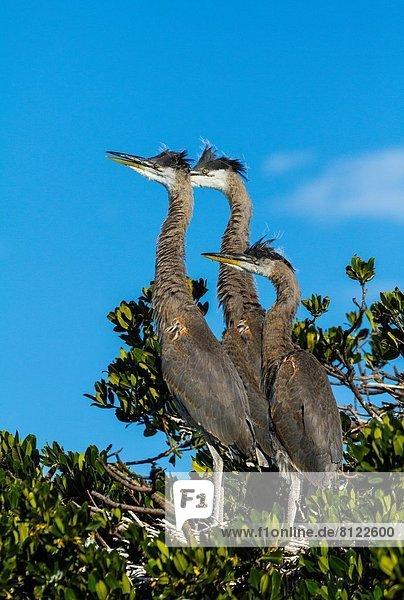 Vereinigte Staaten von Amerika  USA  Amerika  Everglades Nationalpark  Florida