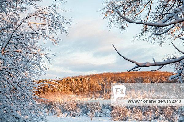 Winterliche Landschaftsszene