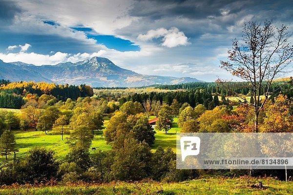 Europa Landschaft Wald Herbst Wiese Spanien Baskenland